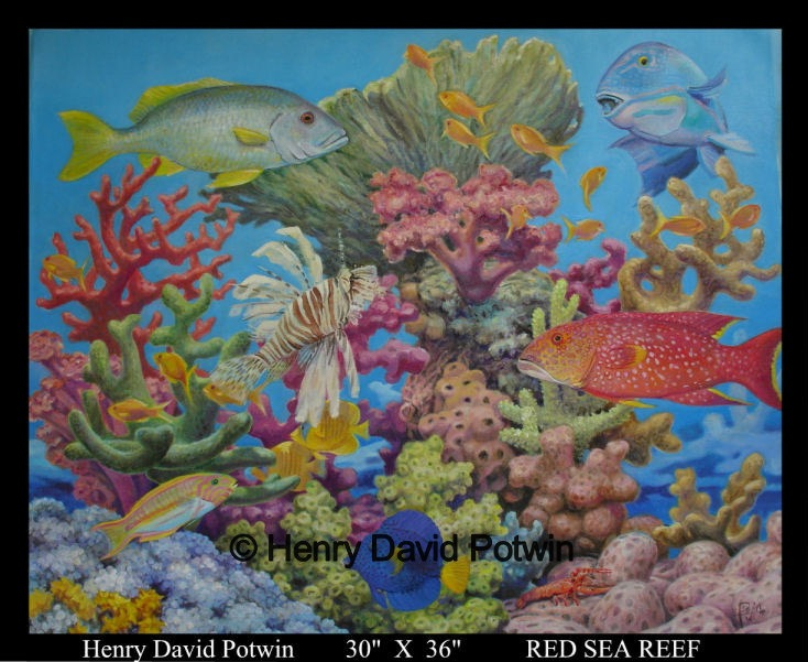 Red Sea Reef  - 2007 30X36""