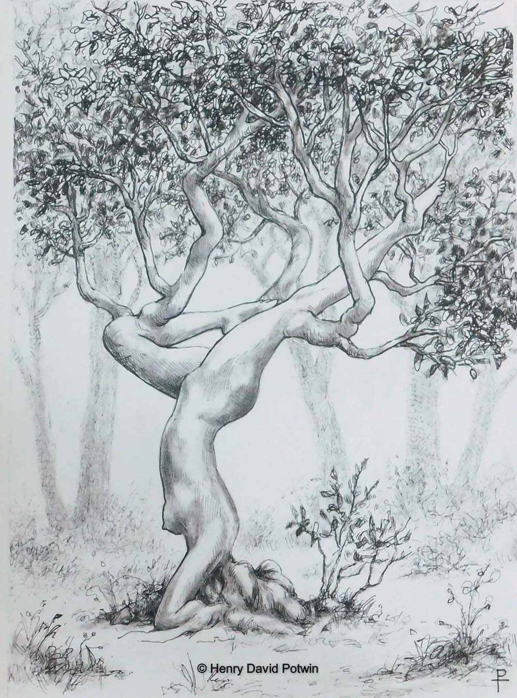 Asana Tree Bw1