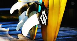surfboissature