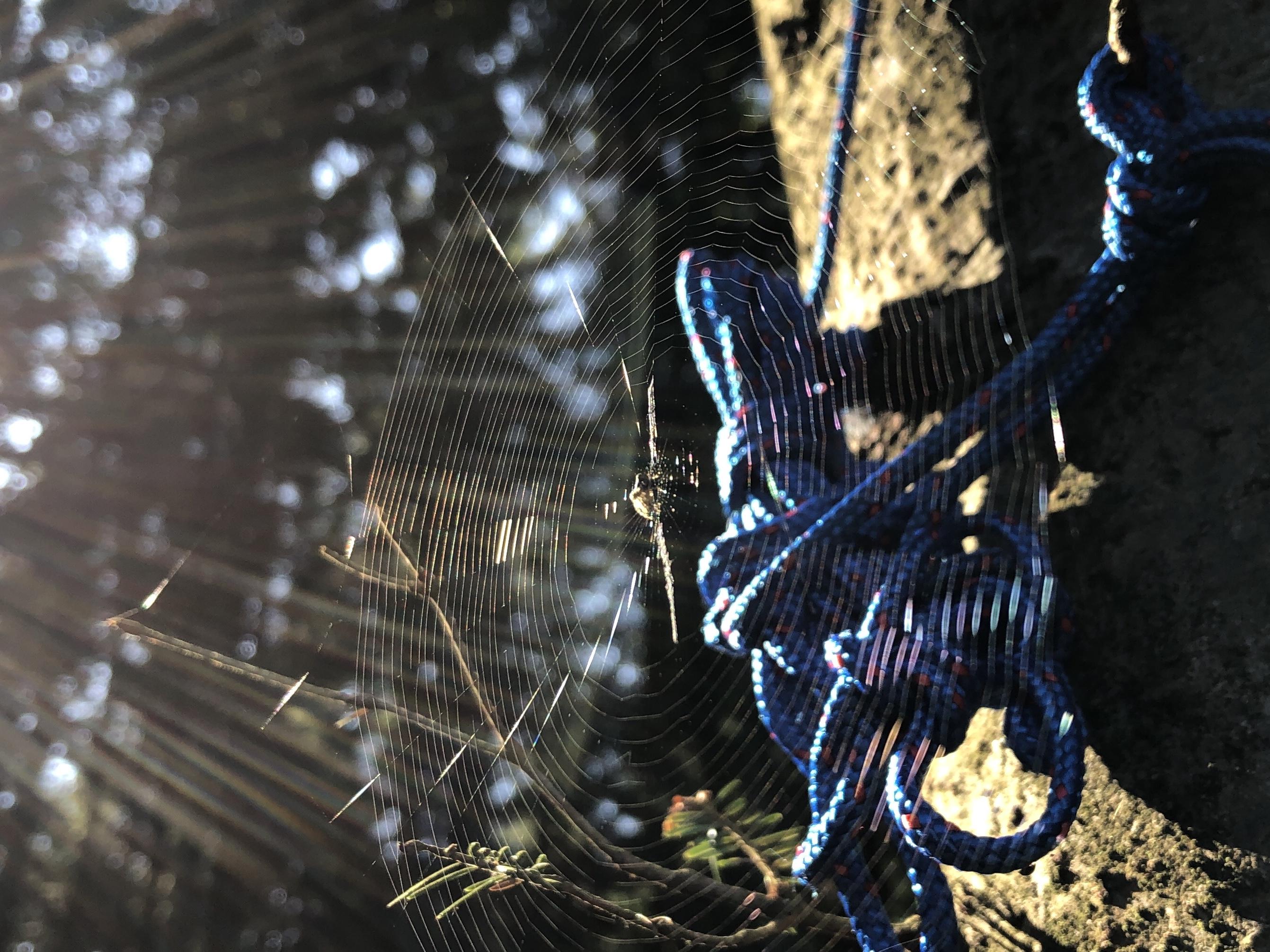 Ludewigas Spinnennetz
