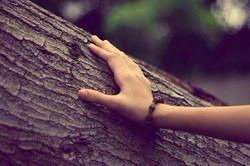 arbremain
