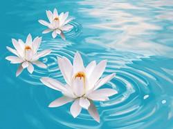 lotus20