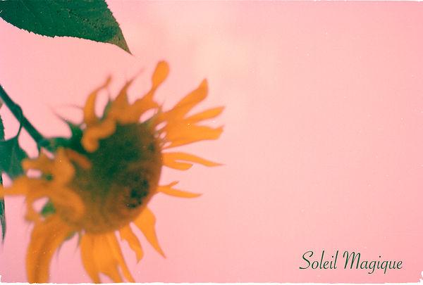 sunflower.pink.SOLEIL.jpg