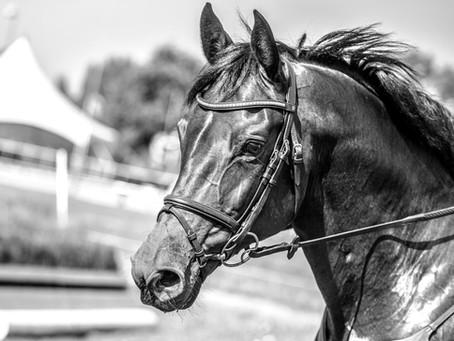 #SundaySchool: Welke kleuren kunnen paarden zien en wat voor inzicht geeft dit in de eventingsport?