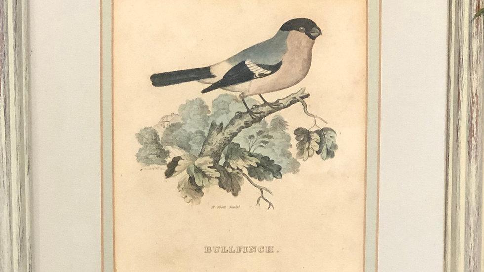 Vintage Inspired Bird Print
