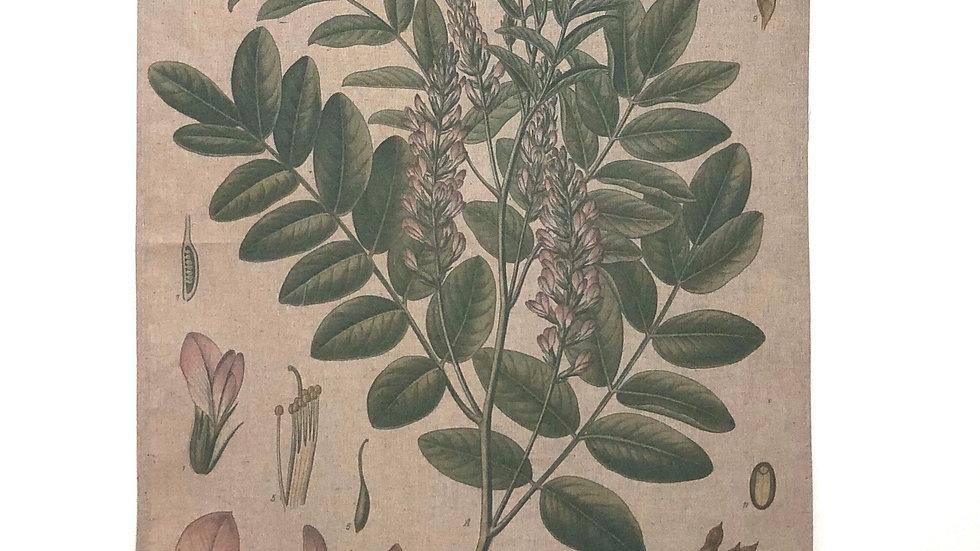 Linen Wall Decor Botanical Scroll Glycrrhiza