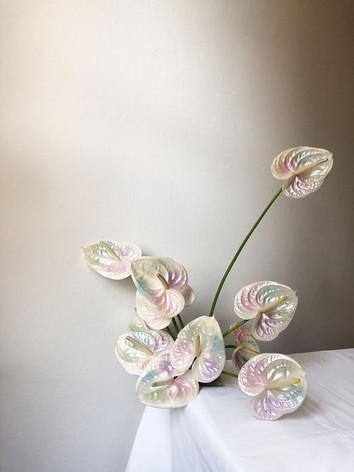 colourful-anthurium-flowers.jpg