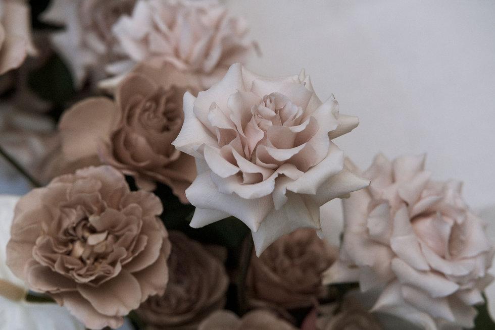 rose-background_edited.jpg