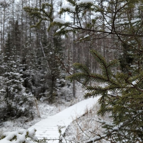 Bog in winter.jpg