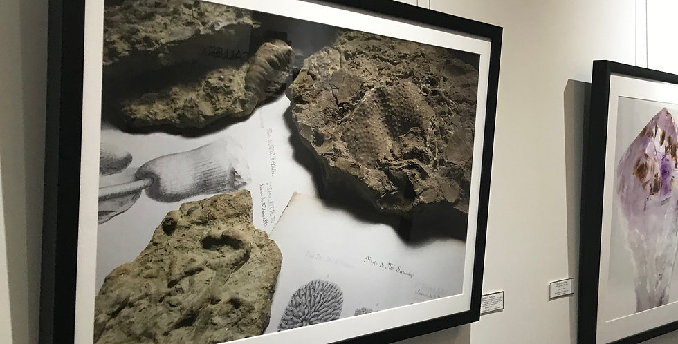 Framed Print 'Suddenly Seafloor' - Fossils and Vintage Books. Rustic & Modern, Science + Art. Brachiopods, bryozoans