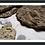 Thumbnail: Framed Print 'Suddenly Seafloor' - Fossils & Vintage Books