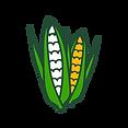 Working Group Corn