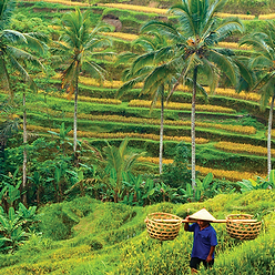 Partnership for Indonesia's Sustainable Agriculture (PISAgro)