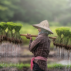 Cambodia Partnerships for Sustainable Agriculture (CPSA)