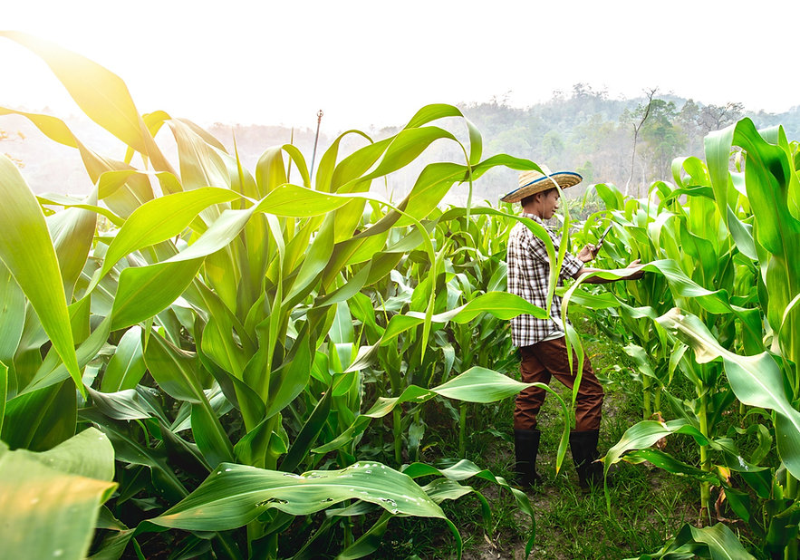 PPSA builds and nurtures national and regional networks aimed at increasing farm productivity and farmers' profitability, and achieveing inclusive agricultural growth.