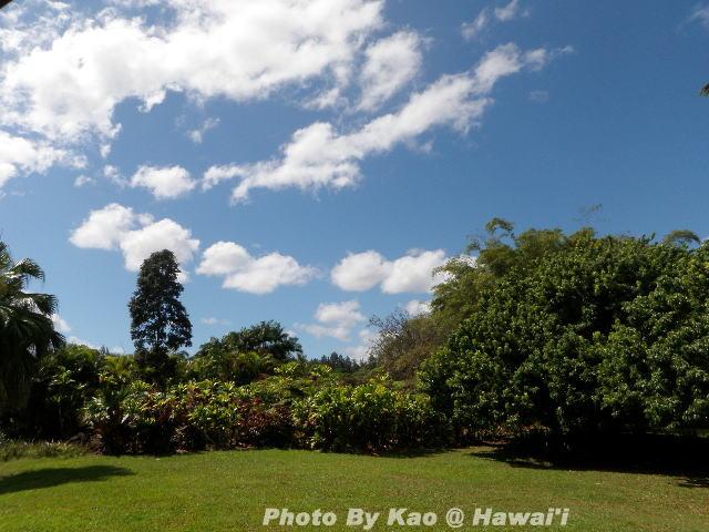ハワイ島でフラを学ぶ