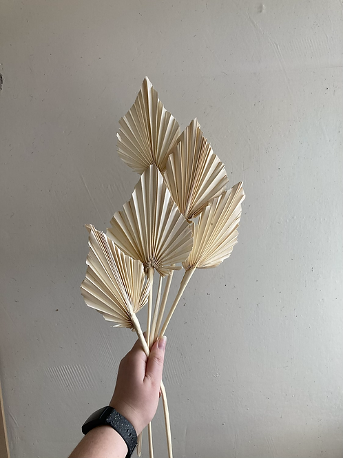 Palm Spears (set of 5)