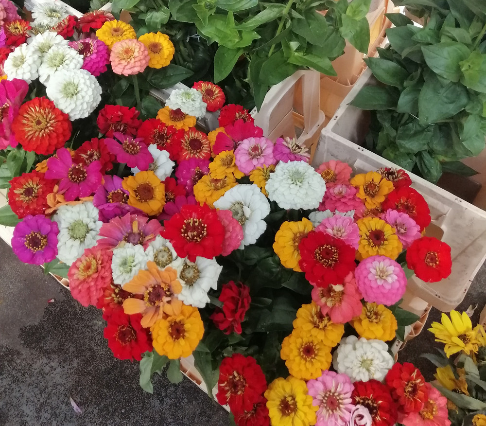Zinnias at Covent Flower Market, London- author's own image.