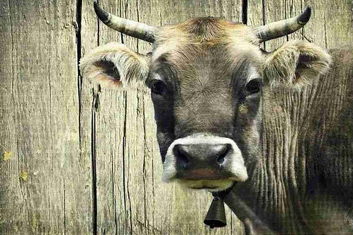Platzset Kuh, waschbar