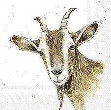 Tolle Geschenke mit Ziegen Steinböcke und Schafe