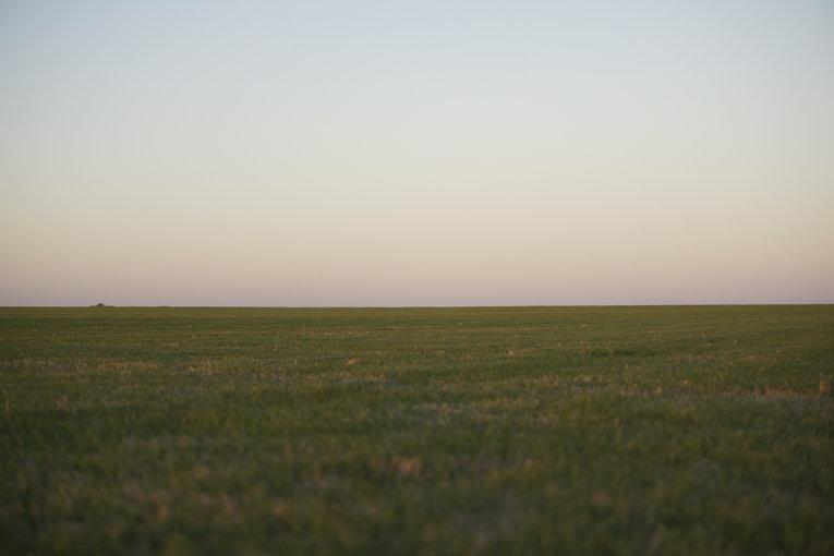 grass - portrait mode2.jpg