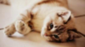 communication animale, intuitive, chat, comportement, soins énergétiques, fleurs de Bach