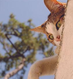 communication animale, chat, fleurs de Bach, soins énergétiques, comprendre comportement, télépathie