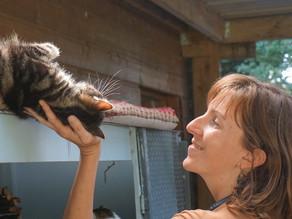 Les limites de la communication animale dans le cas des problèmes de comportement