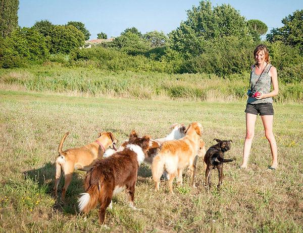 communication animale, chiens, comportementaliste, fleurs de Bach, soins énergétiques, problème comportement, comprendre, communiquer