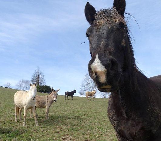 communication animale, cheval, ânes, soins énergétiques, fleurs de Bach, comportement, télépathie, équidés, communiquer, parler