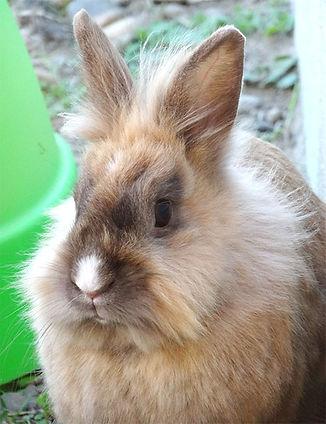communication animale, télépathie, lapin, comportement, soins énergétiques