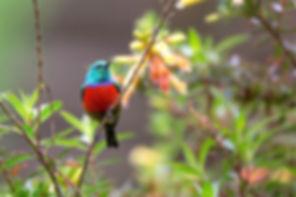 communication animale, intuitive, oiseau, comportement, soins énergétiques, fleurs de Bach