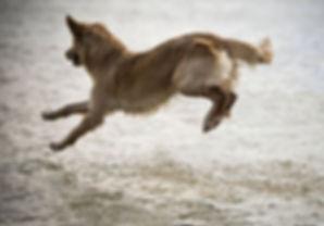 communication animale, intuitive, chien, comportement, comportementaliste