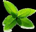 feuilles de menthe