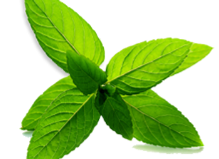 Peppermint Leaf (Dry)