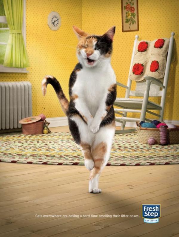 fresh-step-cat-litter-cross-legged-cat-3-small-42790.jpg