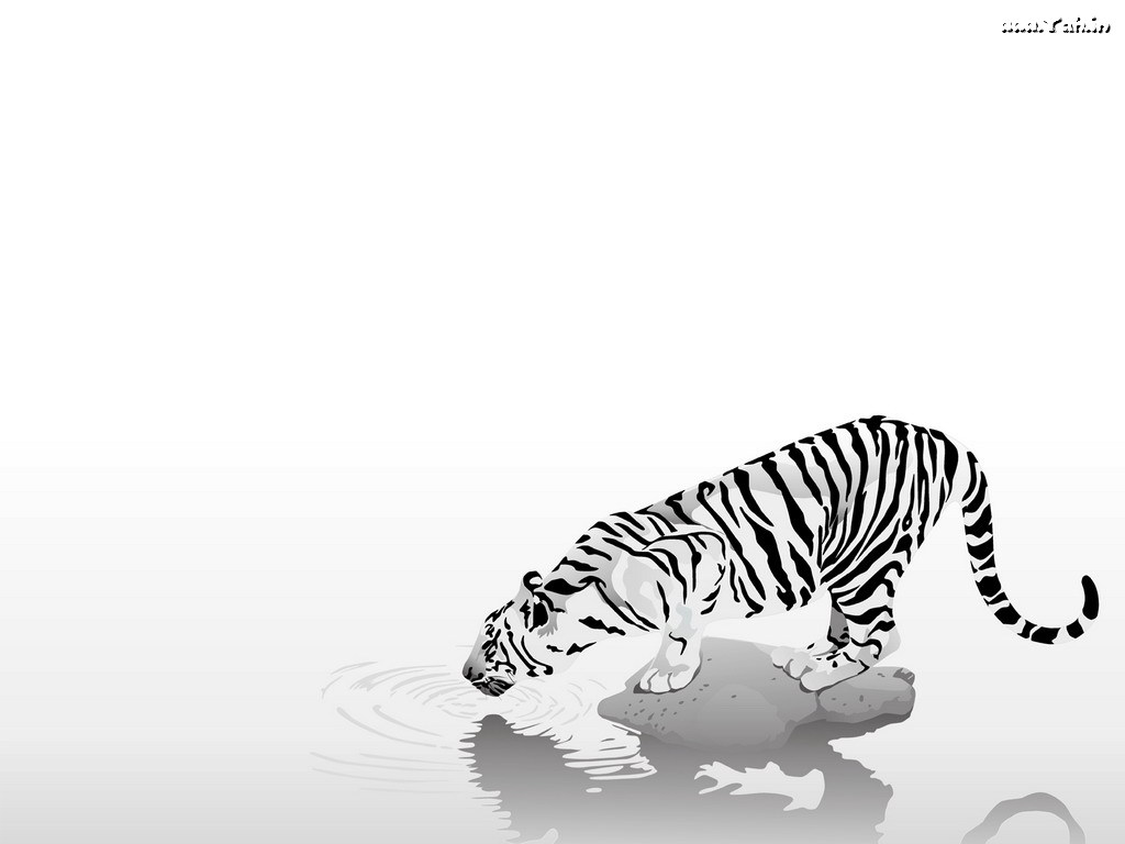 tiger-on-river_7948.jpg