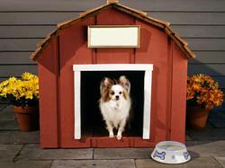 dog-house.jpg