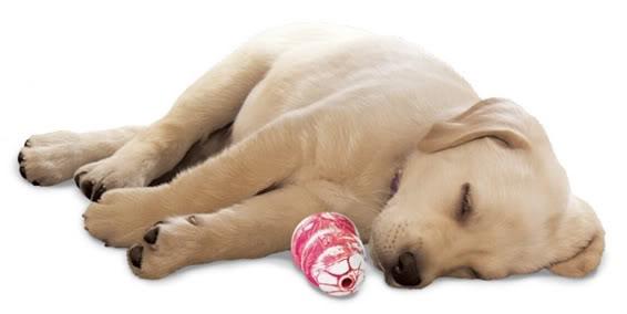 dog-chew-toys-1.jpg