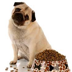 1260294557_nutrition2-pug-ed.jpg