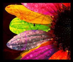 colorful-daisy-1-pattern.jpeg