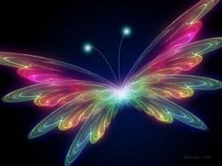 colourful-butterfly-wings-pattern.jpeg