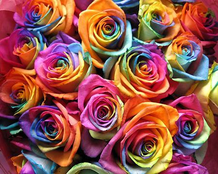 rainbow-angels-lovely-rose.jpeg