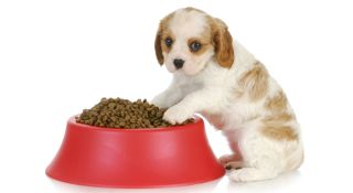 puppy-food-bowl-iphone.jpg