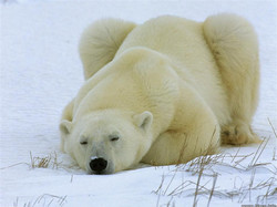 a-bear-of-a-day.jpg