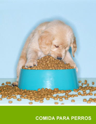 comida_perros.jpg