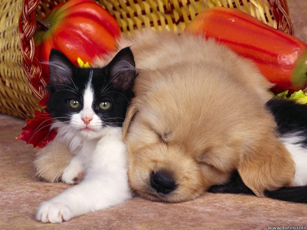 cat-nap.jpg