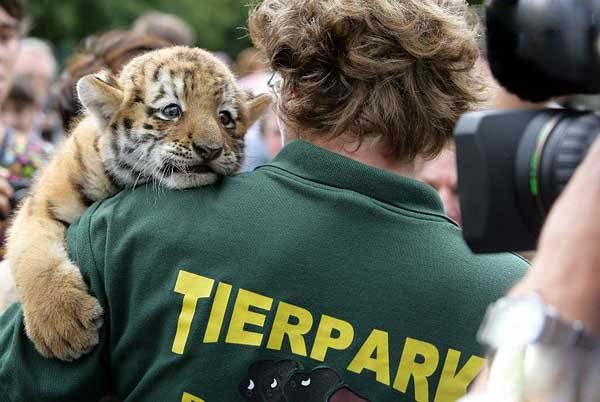 little-tiger-04.jpg