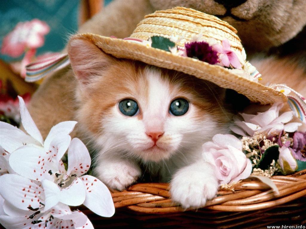 cat-fancy.jpg