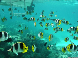 beautiful-fishes-45s copy.jpg